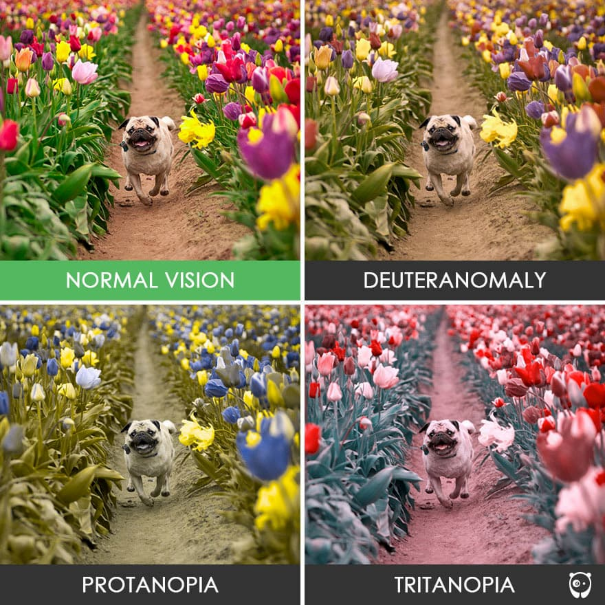 Normal vision compared to other forms of color deficiency such as deuteranomaly